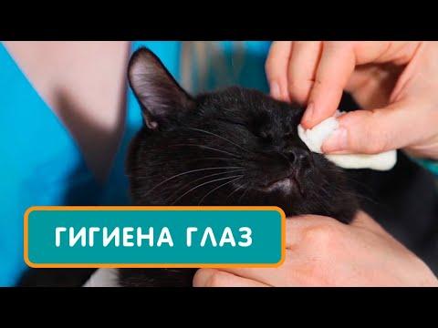 Как почистить глаза коту
