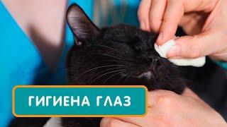 Как правильно чистить и чем промыть глаза коту, кошке или котенку. Совет ветеринара