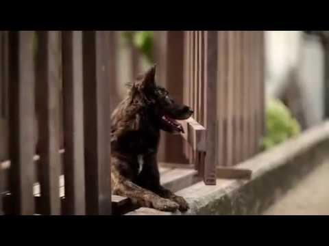 film pendek persahabatan manusia dan hewan bikin nangis