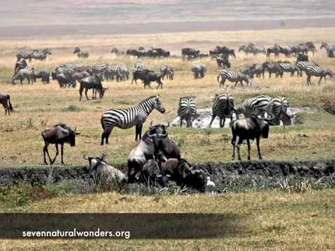 Wildlife of Ngorongoro