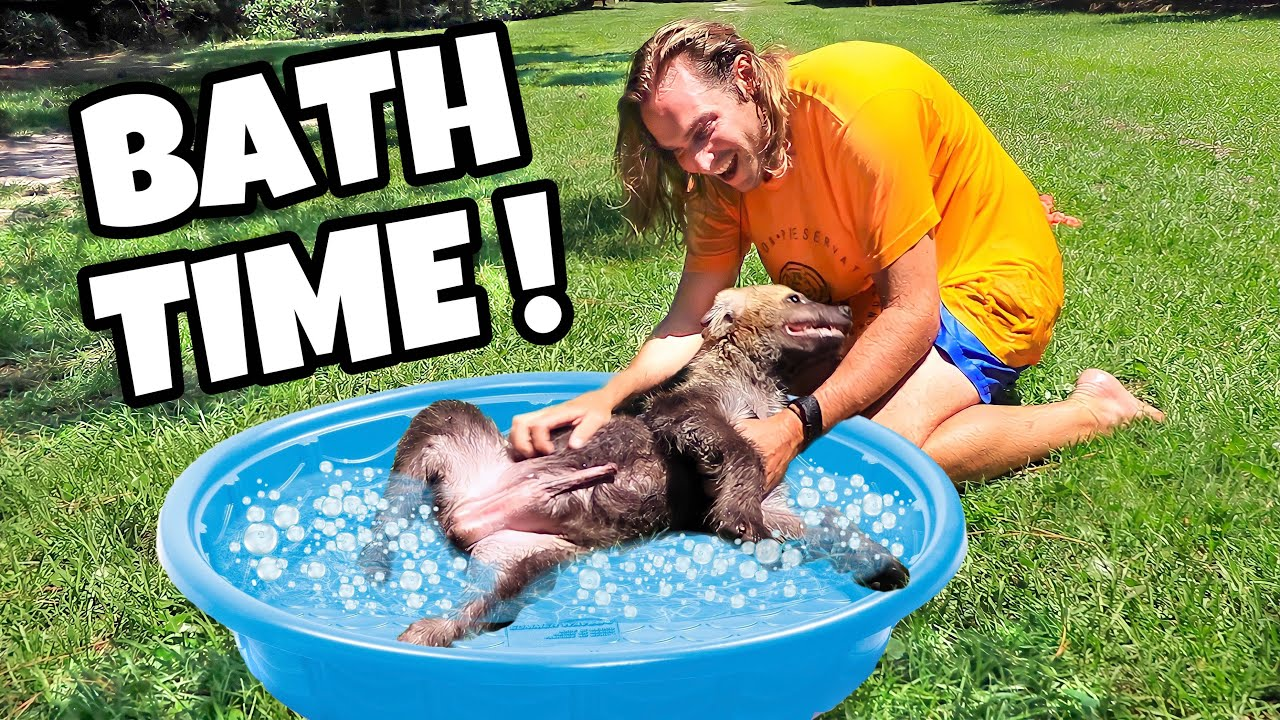BABY HYENA GETS A BUBBLE BATH !