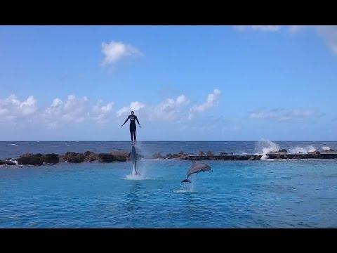 Dolphin Show at Dolphin Academy Curacao