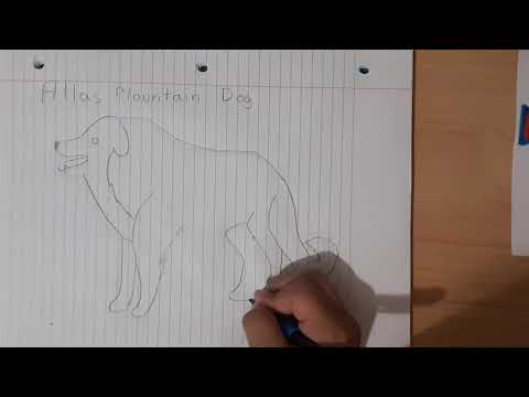How To Draw An Atlas Mountain Dog