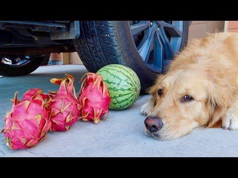 Sammie's Crushing Crunchy & Soft Things By Car! Dragon Fruit Vs Car