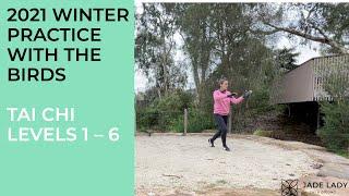 Yang Tai Chi Winter Practice