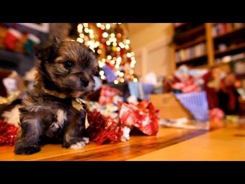 גורי כלבים לחג המולד
