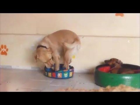 Wanna Trade Dog Beds? || ViralHog