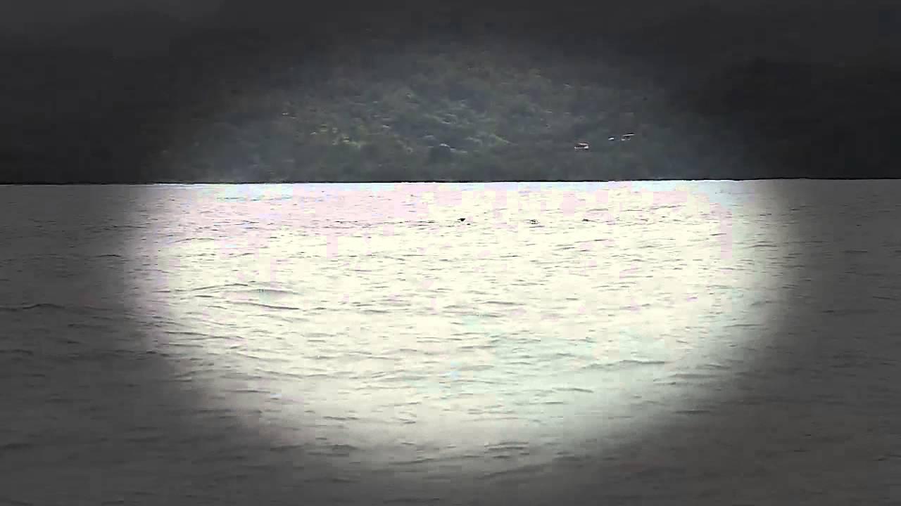 200 Ballenas Nos Visitan Para Tener A Sus Cras