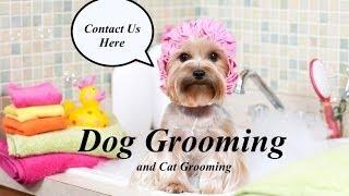 Honolulu Dog Grooming, Dog And Cats Grooming In Honolulu Hi