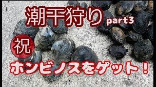 前回(潮干狩り2)で行った多摩川河口の川崎側。ホンビノス貝は、1個も...