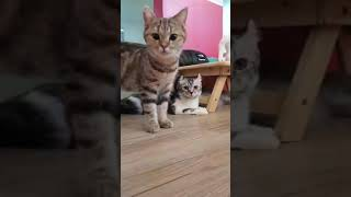 CUTE CAT VIDEO    MY ALL LOVEY CAT
