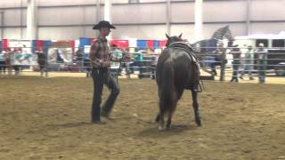 Priceless Horsemanship-Riding Clips