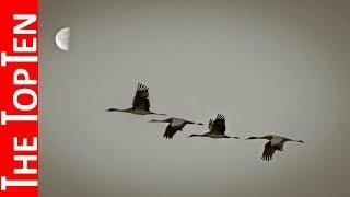 The Top Ten Highest Flying Birds In The World