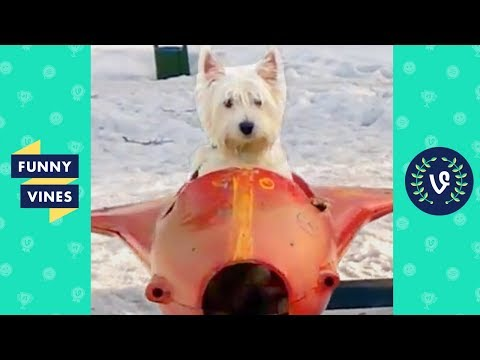 TRY NOT TO LAUGH - Cute Funny ANIMALS - Funny Videos December 2018 - 동영상