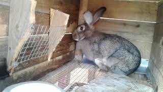 Кролики♡ обзор хозяйства♡