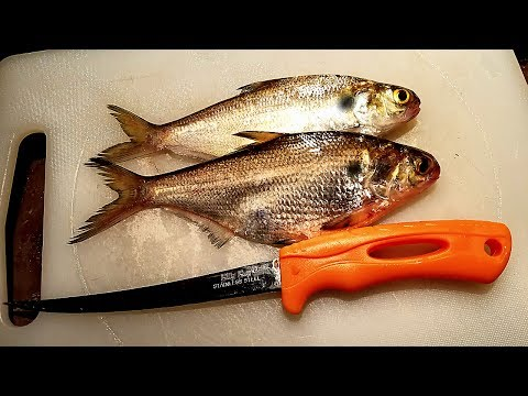 SHAD Catch And Cook?!?!? Trash Or Delicious?!?