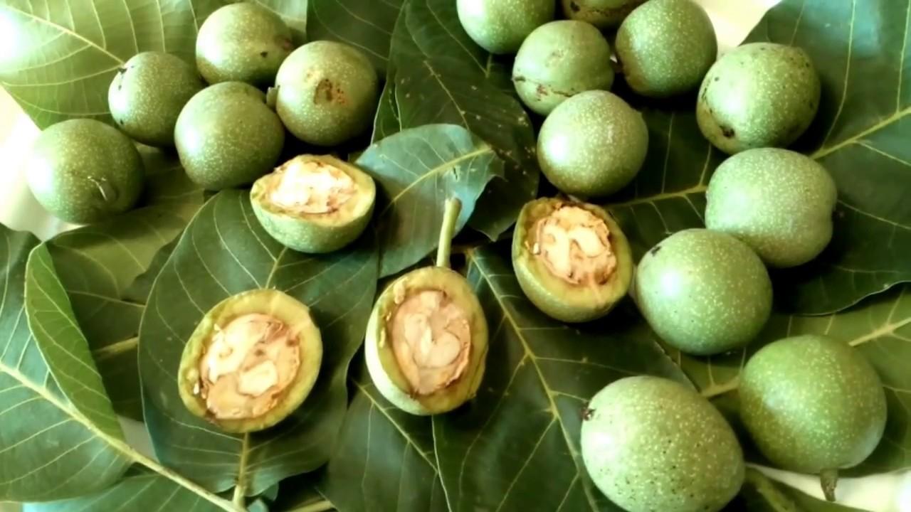 Орех грецкий (зеленый) и его целебные свойства. Настойка ореха и его применение.