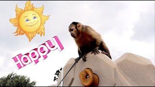 Monkey Training At the Park!