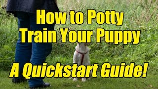 How to Potty Train a Puppy - A Quickstart Guide on How to House Train a Puppy the Right Way!