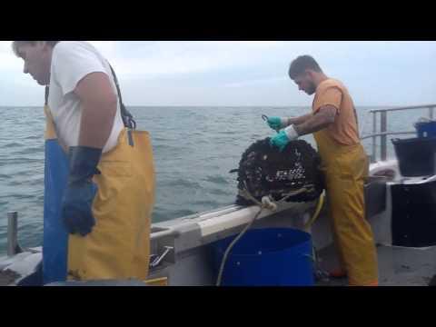 Lobster Fishing Jersey Channel  Islands