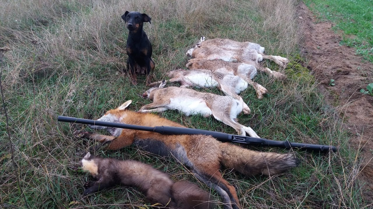 ШОК!!! Вот это ОТКРЫТИЕ ОХОТЫ НА ЗАЙЦА!!! crazy hunting 2018 - 2019