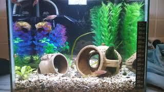 Нано аквариум на 15 литров