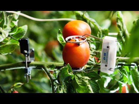 7 công nghệ nông nghiệp giúp Israel phát triển bền vững