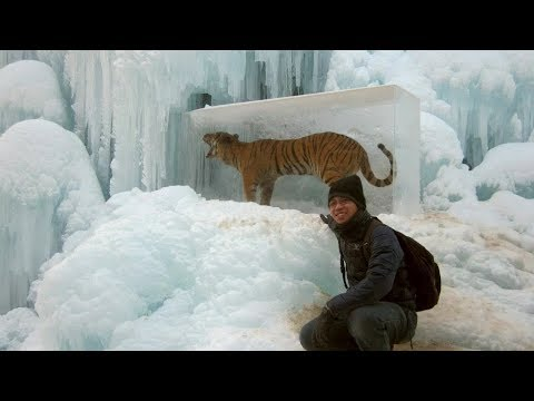 Animals Found FROZEN In Ice! (part 2)
