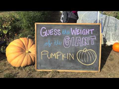 WSU Organic Farm - Fall Harvest Celebration