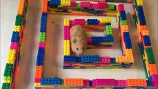Mini Lego Maze for Hamster Jerry