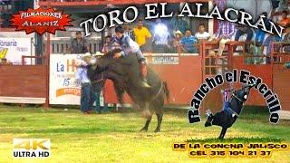 CAMPEONÍSIMO TORO EL ALACRÁN EN EL TORNEO DE GANADEROS LA HUERTA 2015
