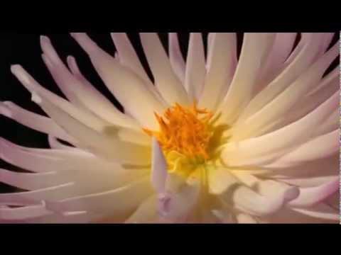 La Bellezza della Fiducia - Osho
