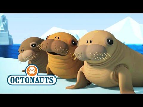 Octonauts Season 4 Exclusive Walrus Pups