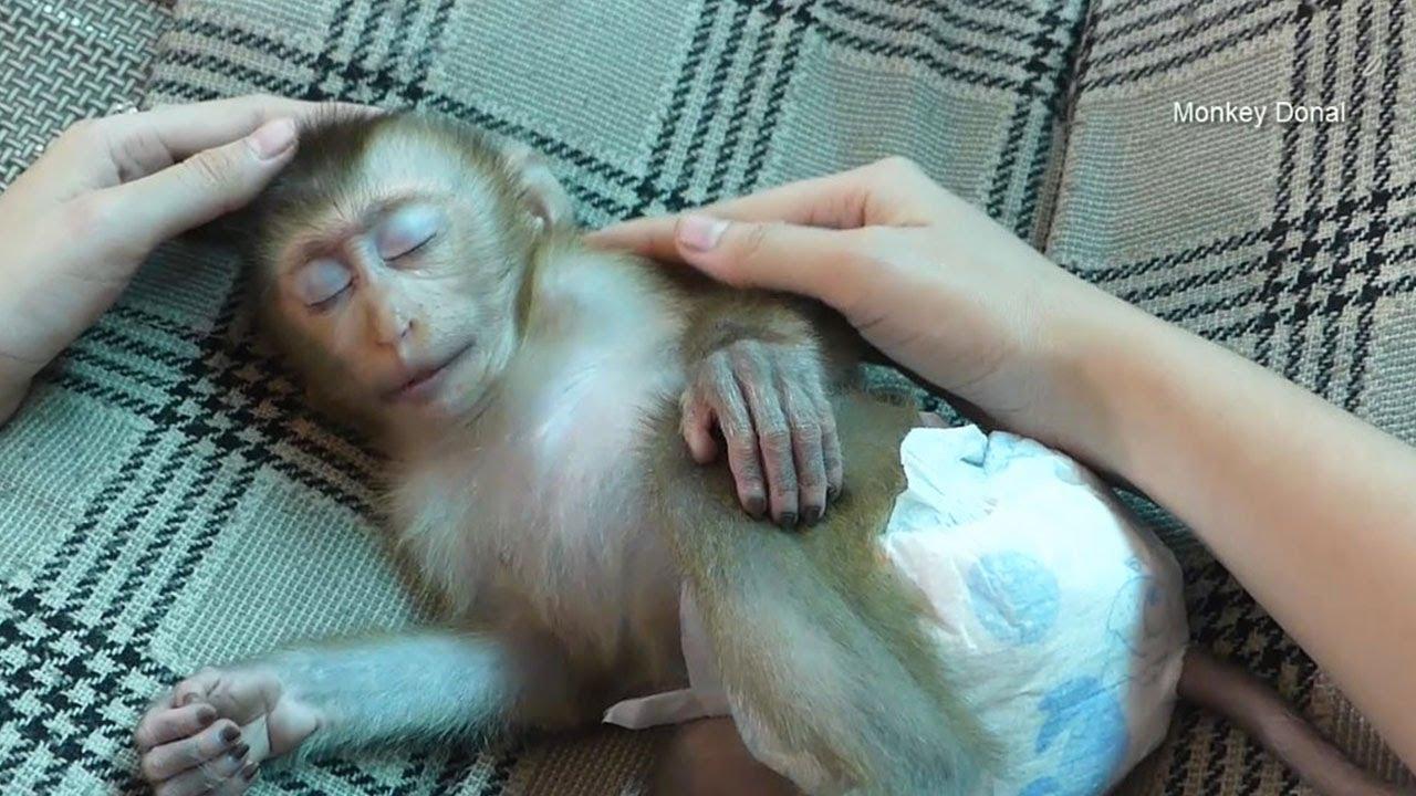 Monkey Donal Need Mom Grooming Before Sleep