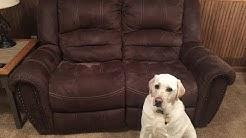 Easy sofa cushion repair!