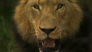 Das Waisenhaus für wilde Tiere - Trailer Staffel 3