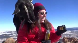 Lynn KCØYQF Manages a SOTA Pile-up ...Plus a Goat!