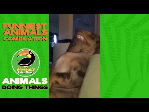 Priceless Pooches Volume 2 - Funny Dog Compilation