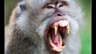 Бали! Лес обезьян! Обломали секс )))))
