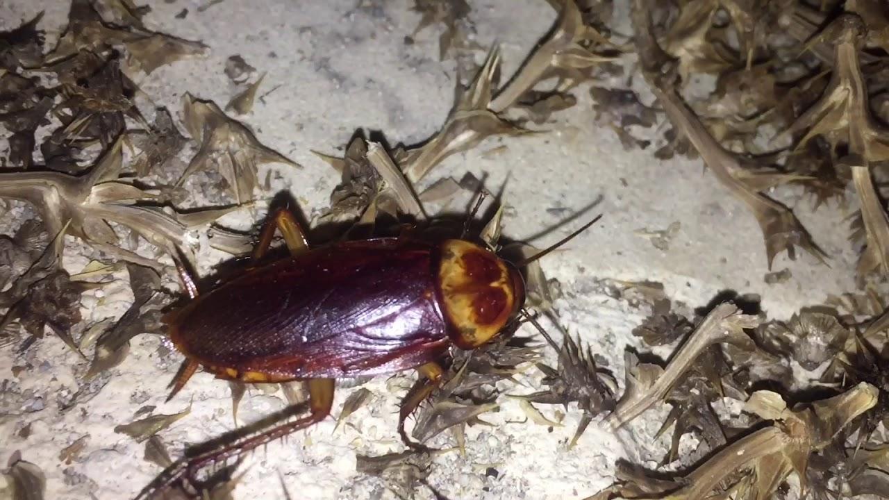 заложниках боевиков тараканы на кипре фото туристов это был тренд