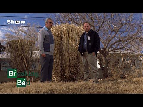 Breaking Bad - Bogdan & Inspector