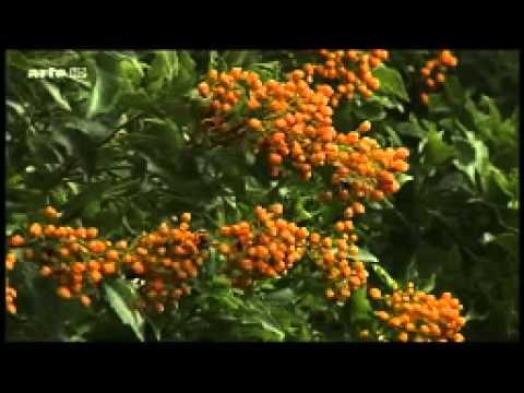 Documentaire sur les forets tropicales humides