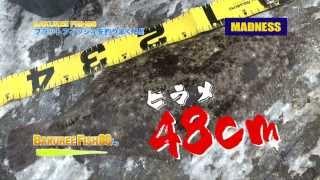 MADNESS バクリーフィッシュ86 ワームで狙う マゴチ ヒラメ!!