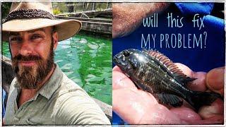 picking-algae-eating-fish-for-my-pond