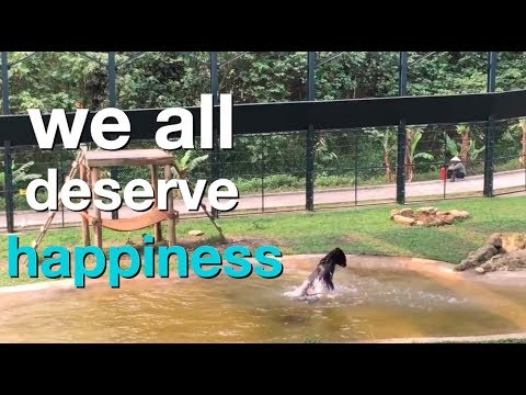 Rescued bears revel in International Happiness Day 2019 Mp3