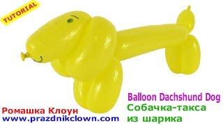 СОБАЧКА такса ИЗ ДЛИННОГО ШАРИКА ШДМ как сделать Balloon Dachshund Dog
