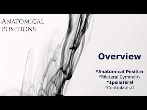 Anatomical Position: Bilateral Symmetry, Ipsilateral and Contralateral: Anatomy & Physiology