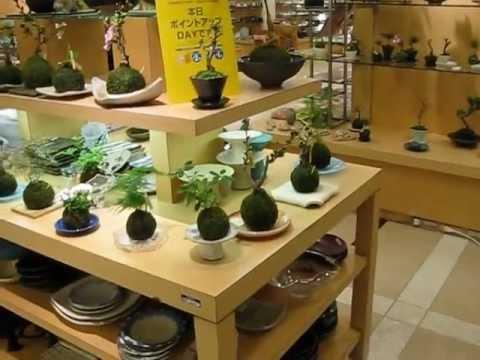 苔玉催事 京都Dデパート - YouTube