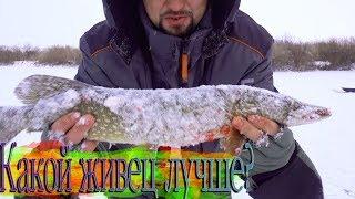НЕ первый лед Щука на балансир и горы окуня Рыбалка на Ишиме