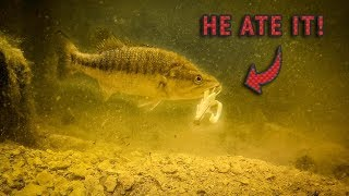 My TOP Bed Fishing TIPS (RARE BASS Caught On Underwater Camera)